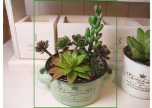 画像1: 【光触媒加工】スープカップin多肉植物(寄植え) グリーン